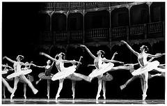 balletsophiacat.jpg