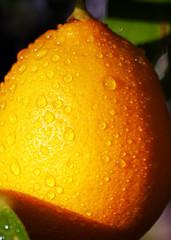 lemon laws protect you